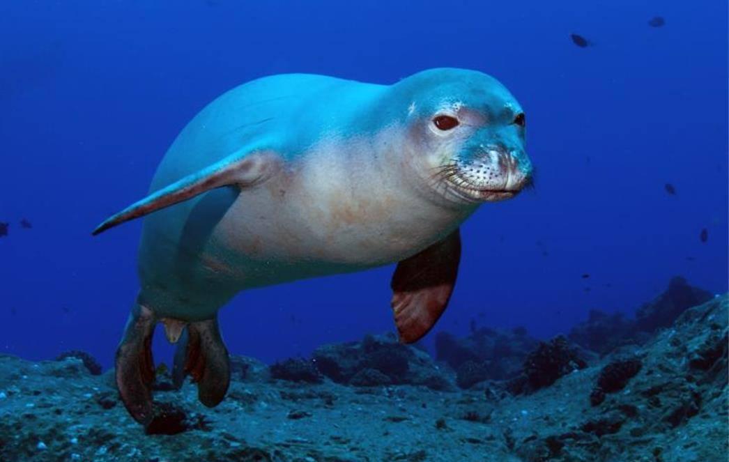 rarest animals in the - photo #25